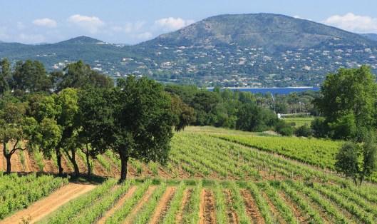 Vignoble Minuty sur presqu'île de Saint Tropez