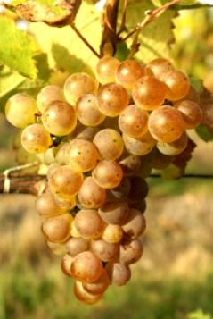 Romorantin Raisins Cour Cheverny - Terroir Evasion