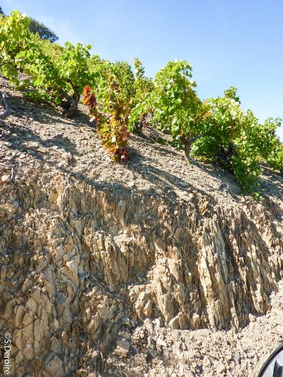 Cave Terres des Templiers - Schiste roche mère