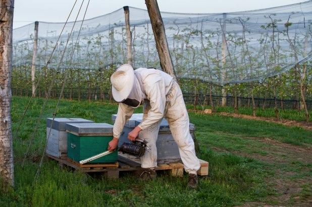 Pommes Golden du Limousin - Apiculteur et ruche