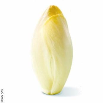 L'Endive blanche chicorée