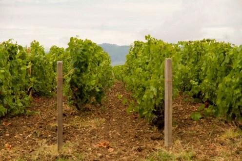 vigne Château de Briante Beaujolais
