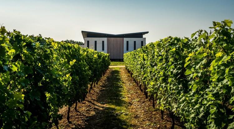 Domaine de Rocheville vignes Loire