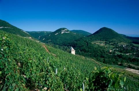 Vignoble Bugey Montagnieu - 1200