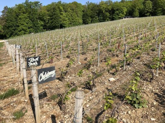 Bligny Clos pinot chardonnay
