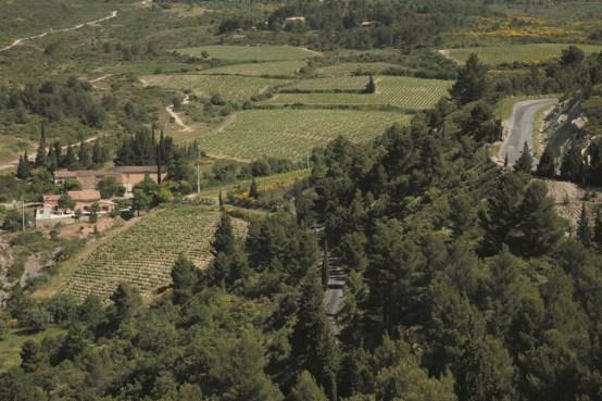 CANTAUSSEL Vignes