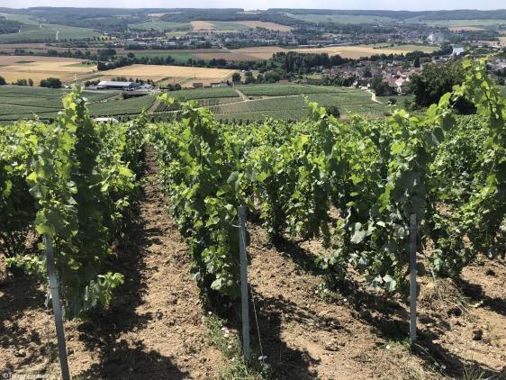 Piot Sevillano champagne Vignes et vue