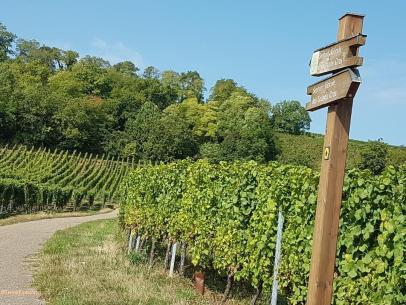 Alsace Chemin grand cru_vin c2i