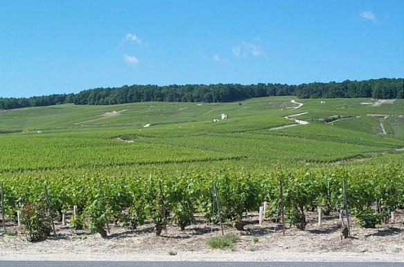 Gonet Champagne coteaux mesnil-vertus