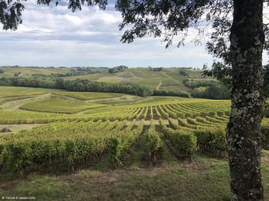 Vinsliquoreux de Bordeaux - Château La Garde - Sainte Croix du Mont - Vignoble