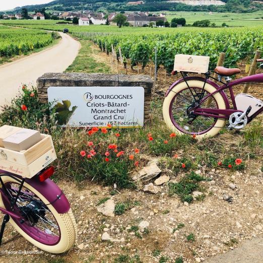 Veuve Ambal - Vignes et vélo oenotourisme