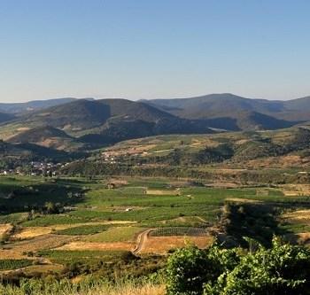Vignerons de Cascastel - Vignobles