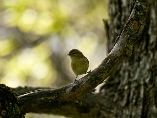 Bird, Polovragi, Romania