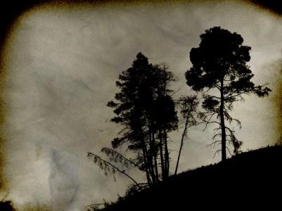 Trees, Polihrono, Greece