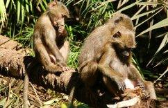 Bavianen in Lake Manyara National Park