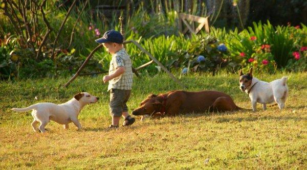 Speelse honden op Simba Farm
