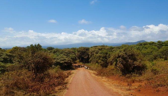 Weg om de Kilimanjaro