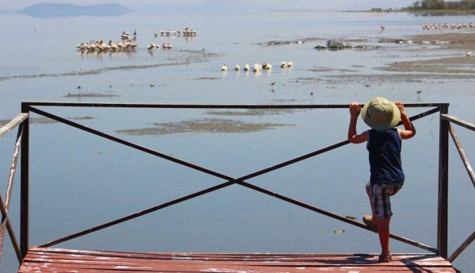 Lake Manyara op om de pelikanen en nijlpaarden beter te kunnen zien
