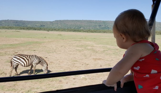 Wild bewonderen hoog vanuit de safariauto