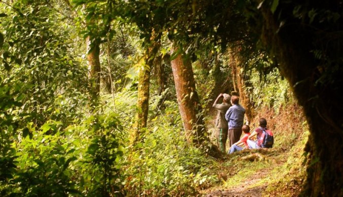 Chimp tracking in Nyungwe Forest in Rwanda