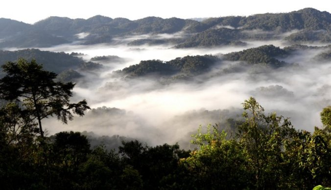 Tropisch regenwoud van Nyungwe Forest National Park in Rwanda