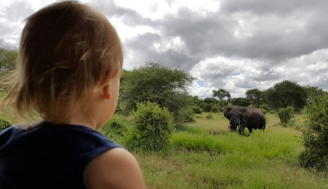 Lisan oog in oog met een olifant in Tarangire National Park