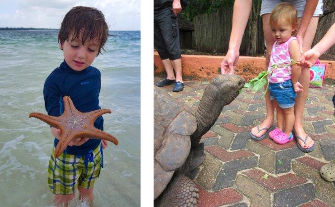 Zeesterren zoeken in de Indische Oceaan en schildpadden voeren
