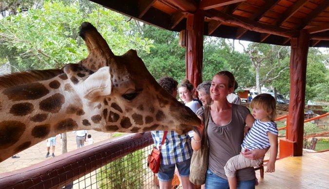Deze giraffen komen wel heel dichtbij in Giraffe Center Nairobi