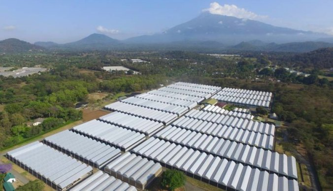 Farm Arusha en Mount Meru vanuit de lucht