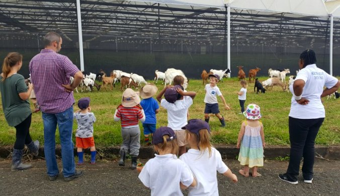 Geiten tellen op de farm in Arusha