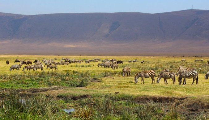 Ngorongoro krater, dierenparadijs op aarde