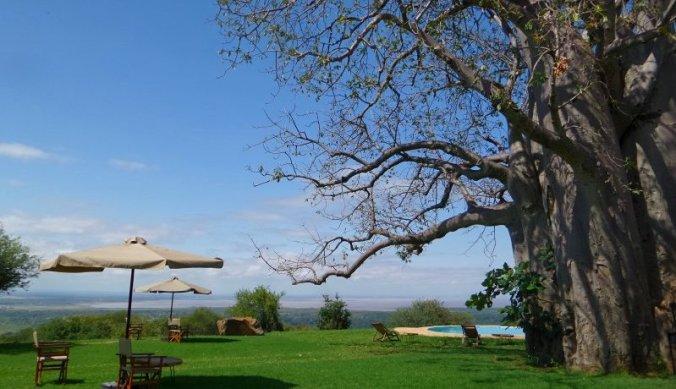 Migombani Camp met baobab en zwembad