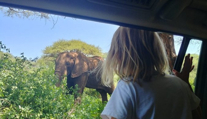 Olifant vanuit de auto in Lake Manyara National Park