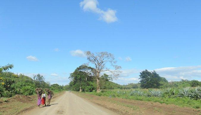 De onverharde weg van Arusha naar de farm