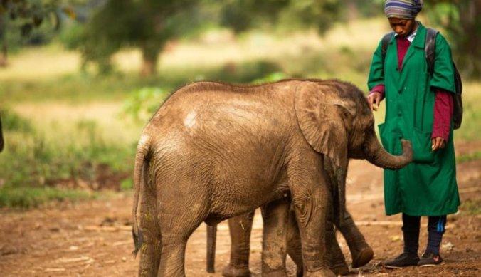 Olifantjes bij Kilimanjaro Animal CREW opvangcentrum