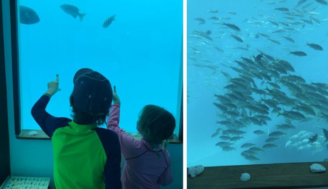 Vissen kijken in de onderwaterkamer van The Manta Resort