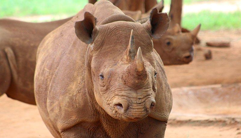 De neushoorns van Mkomazi National Park… zes jaar later