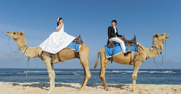 Pre Wedding Camel Riding Bali
