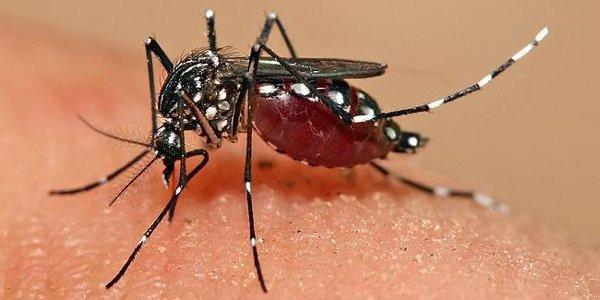 Cerveteri, al via la disinfestazione da zanzara e zanzara tigre