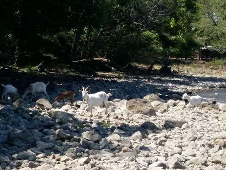 """Emergenza lago di Bracciano, Minnucci: """"Ordinanza Raggi una presa in giro"""""""