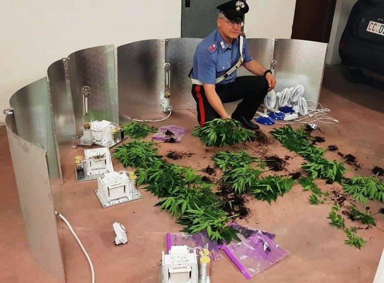"Cerveteri, piante di marijuana ""parcheggiate"" in garage: arrestato dai Carabinieri"