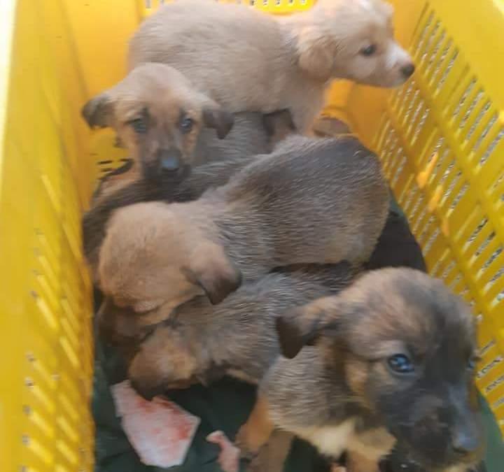 Ladispoli, 7 cuccioli abbandonati accuditi dalle Guardie Zoofile Nogra