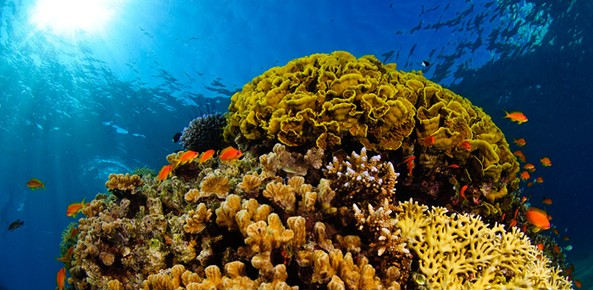 The Dahlak Archipelago in Eritrea contains arguably the richest, most biologically diverse, and most spectacular coral reefs in the world