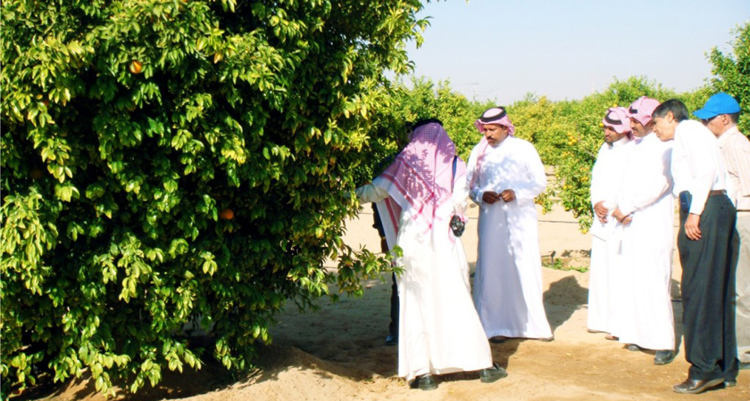 Saudi investor has warned about the failure of Saudi agricultural investments in Ethiopia