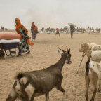 <Deepening Drought Hits Ethiopia Herders as Millions Go Hungry