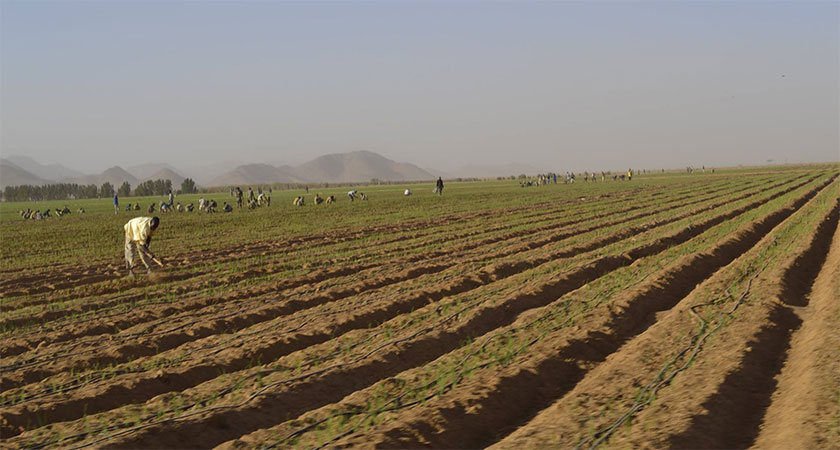 Kerkebet Irrigation Farming