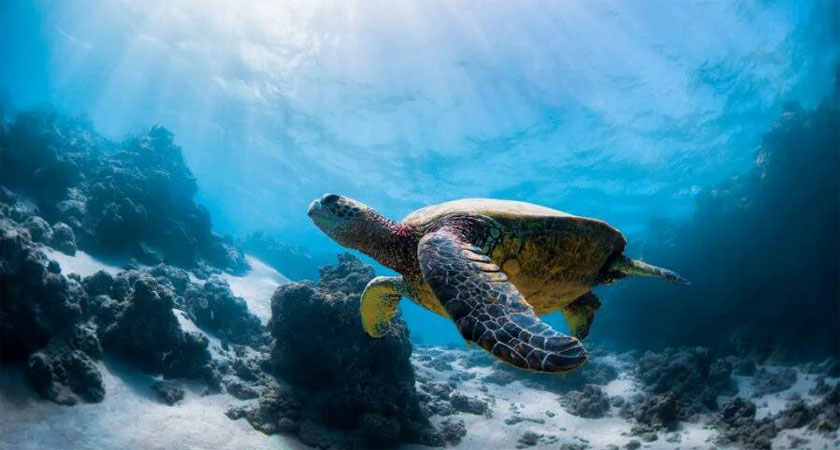 Eritrea's Marine Resource: Worth Exploring, Worth Investing In (Part I)