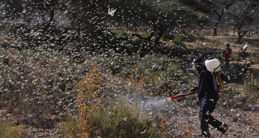 The locust swarm that was detected in the sub-zones of Tsorena, Adi-Keih, Segeneity, Senafe and Mai-Aini was put under control.