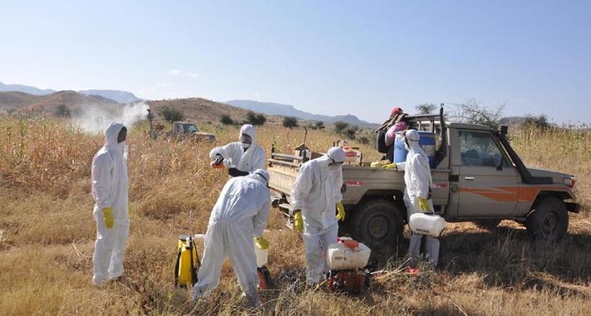 Eritrea: Locust Swarm Put Under Control