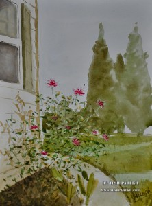 """""""Mica's Roses"""". Watercolor on paper."""